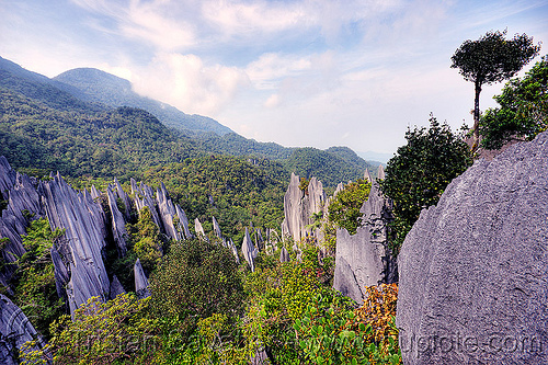 mulu pinnacles (borneo), borneo, erosion, geology, gunung mulu national park, jungle, limestone, malaysia, pinnacles, rain forest, rock