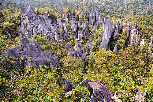 mulu pinnacles (borneo), erosion, geology, gunung mulu national park, jungle, karst, karstic, limestone, pinnacles, rain forest, rock, stone
