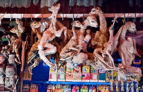 mummified llama fetuses - witch market - la paz (bolivia), babies, dead, dried, dry, fetus, gruesome, hanging, llamas, macabre, morbid, offerings, shop, street market