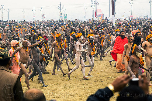 naga babas (naked hindu holy men) at the kumbh mela 2013 festival (india), crowd, flower necklaces, hindu, hinduism, holy ash, kumbha mela, maha kumbh mela, marigold flowers, men, naga babas, naga sadhus, naked, orange flowers, people, procession, sacred ash, sadhu, triveni sangam, vasant panchami snan, vibhuti, walking