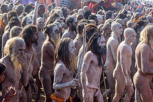 procession of naga sadhus - kumbh mela (india), amavasa, beard, crowd, dreadlocks, dreads, hindu, hinduism, holy ash, kumbh maha snan, kumbha mela, maha kumbh mela, mauni amavasya, men, naga babas, naga sadhus, naked, procession, sacred ash, sword, triveni sangam, vibhuti, walking