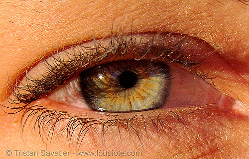 natalie's eye, close up, eye color, eyelashes, hazel, iris, macro, natalie, pupil, right eye, woman