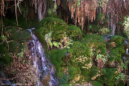 natural springs in a wilderness, moss, springs, stream
