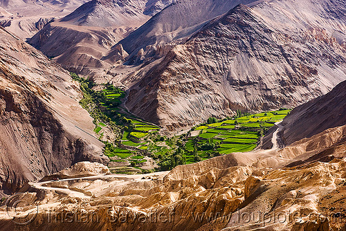 near lamayuru - leh to srinagar road - ladakh (india), agriculture, india, ladakh, lamayuru, mountains, paddies, patch, rice paddy fields, terrace farming, terraced fields, v-shaped valley