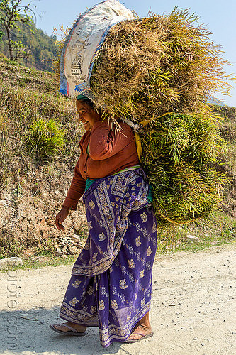 nepali woman carrying bundle of hay (nepal), bundle, carrying, grass, hay, walking, woman