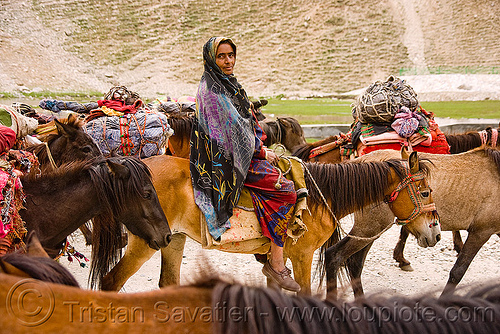 nomads with horses - drass valley - leh to srinagar road - kashmir, caravan, dras valley, drass valley, horse-riding, horseback riding, kashmir, kashmiri gujjars, mountains, muslim, nomads, old woman, pack animal, pack horses, road, saree, sari, zoji la, zoji pass, zojila pass