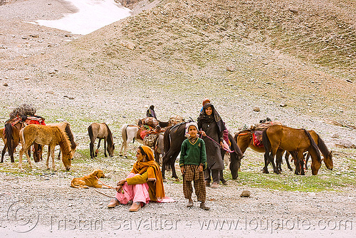 nomads with horses - leh to srinagar road - kashmir, caravan, dras valley, drass valley, gujjars, kashmiri, kashmiri gujjars, mountains, muslim, pack animal, pack horses, people, zoji, zoji la, zoji pass, zojila pass