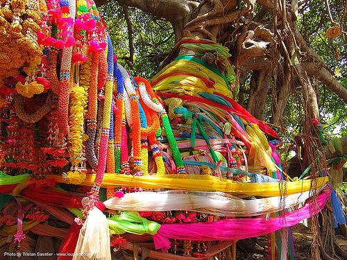 ผ้าแพรเจ็ดสี ต้นไทร พิมาย - offerings - giant banyan tree (near phimai) - thailand, banyan tree, offerings, phimai, ต้นไทร, ประเทศไทย, ผ้าแพรเจ็ดสี, พิมาย