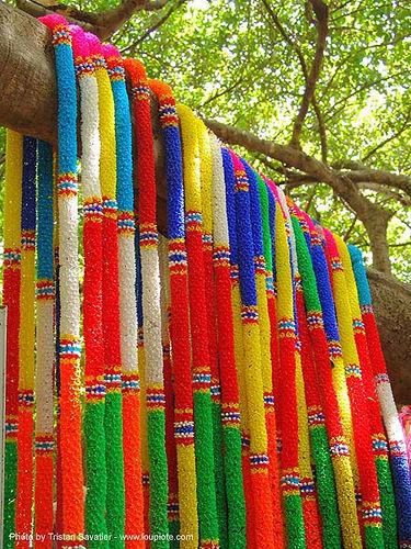 ผ้าแพรเจ็ดสี ต้นไทร พิมาย - offerings - giant banyan tree (near phimai) - thailand, ต้นไทร, ประเทศไทย, ผ้าแพรเจ็ดสี, พิมาย