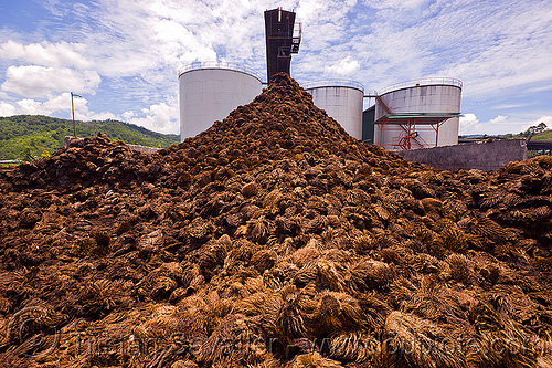 oil palm mill waste, agroindustry, bunches, conveyor belt, heap, industrial, oil palm bunches, oil palm fruits, palm oil mill, palm oil mill waste, palm oil waste, stack, tanks