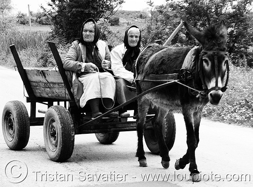 old women on donkey cart (bulgaria), asinus, chariot, donkey cart, equus, horse cart, horses, old, pony, rustic, women, working animal
