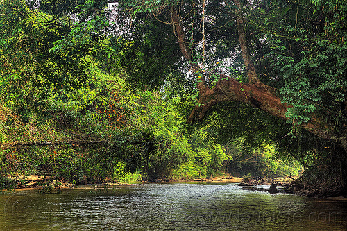 peaceful jungle river (borneo), borneo, gunung mulu national park, jungle, malaysia, melinau river, plants, rain forest, sungai melinau, trees