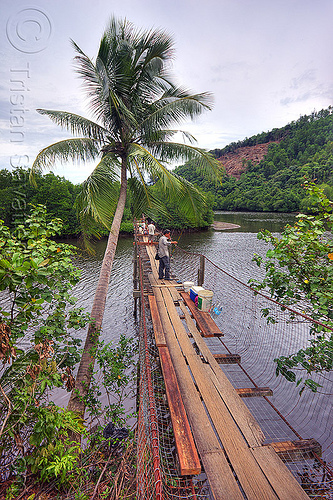 pedestrian bridge over a river, cococut palm, coconut tree, fishermen, lumber, mangrove, men, pedestrian bridge, rain forest, river, rusted, rusty, suspension bridge, water, wooden