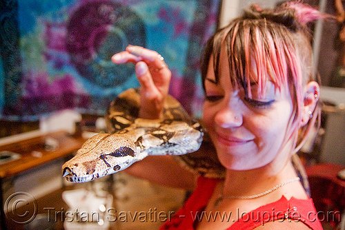 pet boa snake - melody and moa the boa, boa constrictor, head, melody, pet snake, reptile, woman