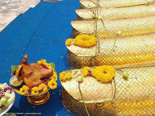 พระพุทธรูป - พระบาท - pig head offering - golden foot of giant standing buddha statue - thailand, bangkok, buddha image, buddha statue, buddhism, buddhist temple, foot, giant buddha, golden color, offering, pig head, sculpture, wat, yellow flowers, บางกอก, ประเทศไทย, พระพุทธรูป