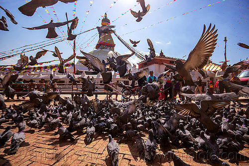pigeons near bodnath stupa - kathmandu (nepal), backlight, birds, bodnath stupa, boudhanath, buddhism, flying, kathmandu, pigeons