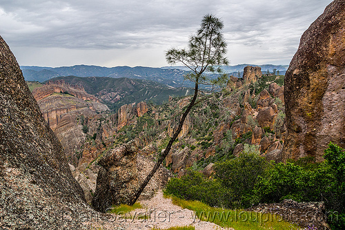 pinnacles national park (california), hiking, pine tree, pinnacles national park, rock formations