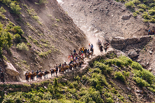 ponies and pilgrims on the trail - amarnath yatra (pilgrimage) - kashmir, amarnath yatra, caravan, crowd, horse-riding, horseback riding, horses, kashmir, kashmiris, mountain trail, mountains, pilgrimage, pilgrims, ponies, trekking, yatris, अमरनाथ गुफा