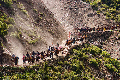 ponies and pilgrims on the trail - amarnath yatra (pilgrimage) - kashmir, caravan, crowd, horse-riding, horseback riding, horses, kashmiris, mountain trail, mountains, people, switch-backs, trekking, yatris, अमरनाथ गुफा