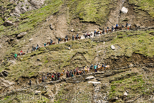 ponies and pilgrims on the trail - amarnath yatra (pilgrimage) - kashmir, amarnath yatra, caravan, horse riding, horseback riding, horses, ind, kashmir, kashmiris, mountain trail, mountains, pilgrimage, pilgrims, ponies, trekking, yatris, अमरनाथ गुफा