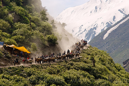 ponies and pilgrims on the trail - amarnath yatra (pilgrimage) - kashmir, amarnath yatra, caravan, crowd, hiking, hindu pilgrimage, horse-riding, horseback riding, horses, india, kashmir, kashmiris, mountain trail, mountains, pilgrims, ponies, trekking