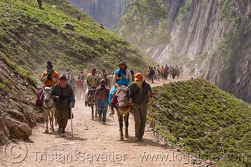 ponies and pilgrims on the trail - yatra - pilgrimage to amarnath cave - kashmir, amarnath yatra, crowd, hiking, hindu pilgrimage, horse riding, horseback riding, horses, india, kashmir, kashmiris, mountain trail, mountains, pilgrims, ponies, trekking
