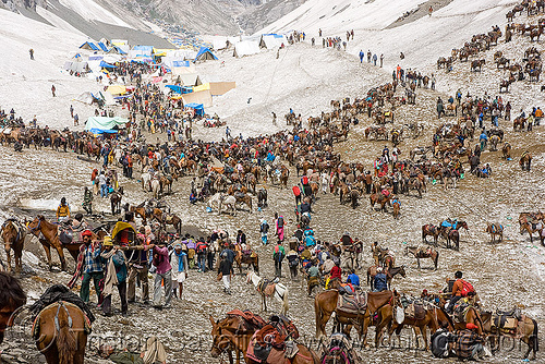 ponies and porters - amarnath yatra (pilgrimage) - kashmir, amarnath yatra, crowd, hiking, hindu pilgrimage, horses, india, kashmir, kashmiris, mountains, pilgrims, ponies, pony station, porters, snow, tente, trekking, valley, wallahs