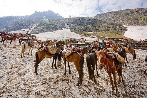 ponies on snow - amarnath yatra (pilgrimage) - kashmir, amarnath yatra, hiking, hindu pilgrimage, horses, india, kashmir, mountains, pilgrims, ponies, pony station, snow, trekking