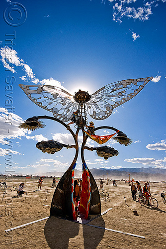 portal of evolution - butterfly - burning man 2009, art installation, backlight, bryan tedrick, burning man, butterfly, portal of evolution