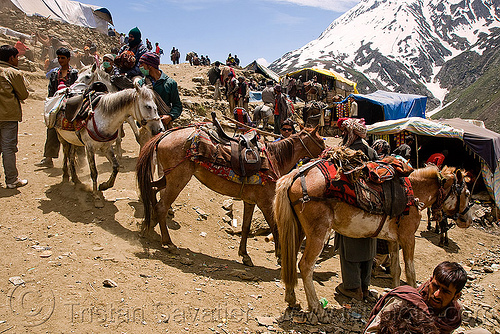 porters with their ponies - amarnath yatra (pilgrimage) - kashmir, amarnath yatra, crowd, glacier, horse riding, horseback riding, horses, kashmir, kashmiris, men, mountain trail, mountains, pilgrimage, pilgrims, ponies, porters, snow, trekking, wallahs, yatris, अमरनाथ गुफा