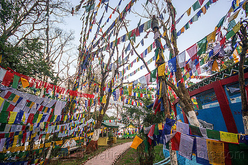 prayer flags - observatory hill - darjeeling (india), buddhism, hindu temple, hinduism, tibetan, trees