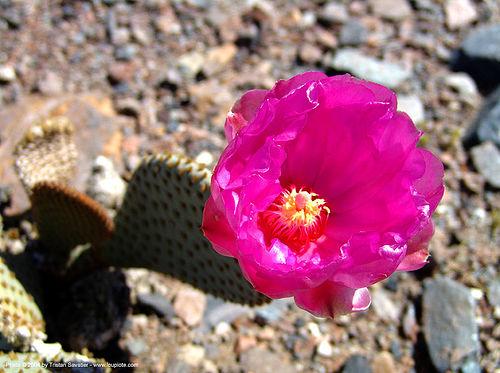 Desert Plants Cactus. desert plants with Between