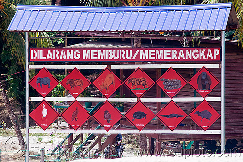 protected species warning sign (borneo), agroindustry, endangered species, no hunting, no poaching, oil palm, plantation, protected species, sukau, warning sign
