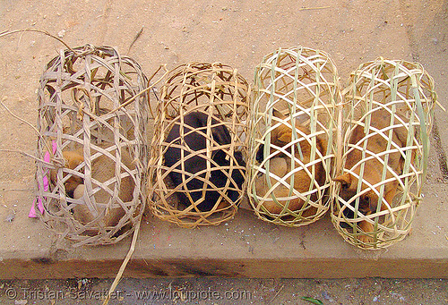 puppies in cage, bamboo cages, cao bang, cao bằng, dogs, market, puppies