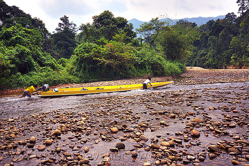 pushing a boat in the shallow waters of the melinau river - mulu (borneo), boatman, boatmen, forest, gunung mulu, gunung mulu national park, jungle, men, pebbles, people, plants, rain forest, river bed, river boat, rocks, shallow river, small boat, sungai melinau, trees, water, yellow boat
