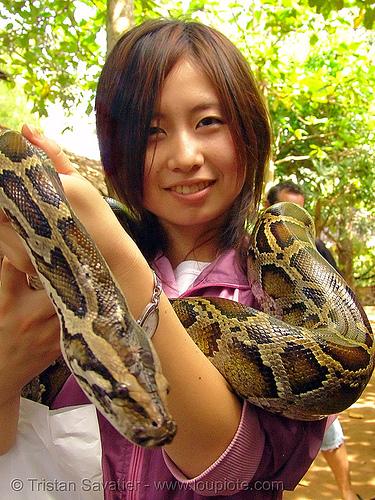 python snake pet, chiharu, head, japanese, people, pet snake, python snake, reptile, woman
