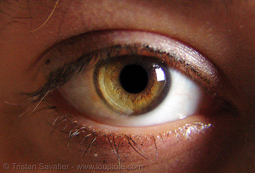 rachel's eye, close up, eye color, iris, rachel shank, woman