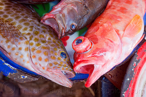 red fish with bulging eyes at  fish market (flores island), fish market, fishes, flores island, fresh fish, indonesia