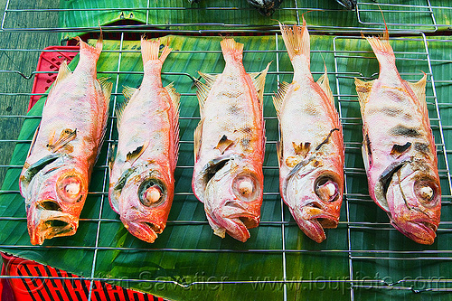 red snapper - grilled fishes, barbecued, bbq, cooked, fishes, food market, grilled, red snapper, restaurant, seafood