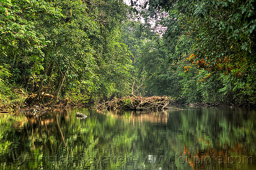 reflections in river water, gunung mulu national park, jungle, melinau river, plants, rain forest, reflections, sungai melinau, trees, water