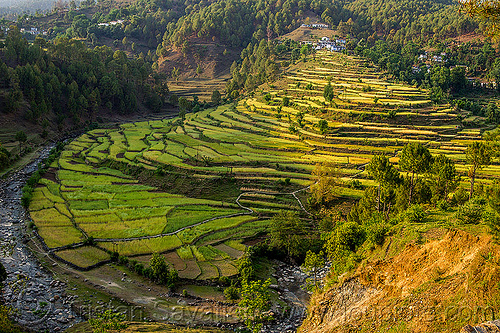 rice fields in fan-shape terraces (india), agriculture, bend, pindar valley, rice fields, rice paddy fields, river, slope, terrace farming, terrace fields, village, water