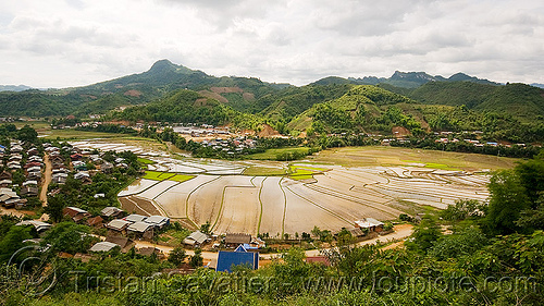 rice fields in xam nua - nam xam valley (laos), laos, rice paddies, rice paddy fields, xam nua