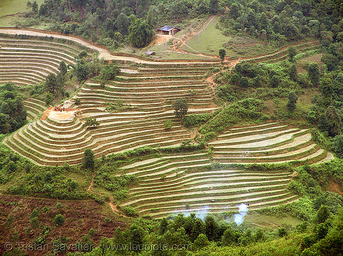rice fields - terrace farming - between Tám Sơn and Yên minh - vietnam, agriculture, rice paddies, rice paddy fields, terrace farming, terraced fields, vietnam