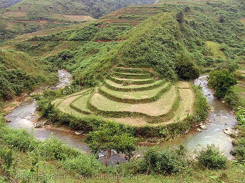 rice fields - terrace farming in river bend- between Tám Sơn and Yên minh - vietnam, agriculture, bend, loop, rice paddies, rice paddy fields, river, terrace farming, terraced fields, valley, vietnam