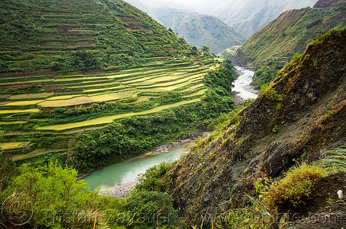 rice terraces in steep valley in the cordillera - chico river (philippines), agriculture, chico river, chico valley, cordillera, philippines, rice paddies, rice paddy fields, terrace farming, terraced fields