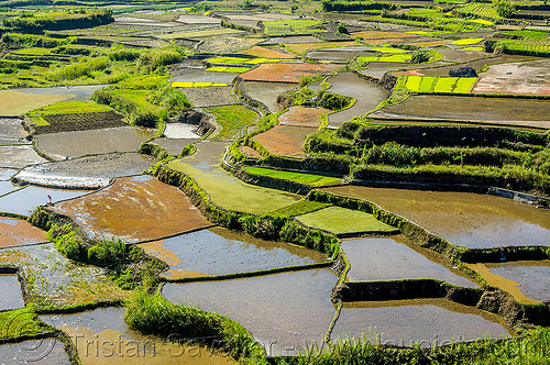rice terraces near sagada (philippines), agriculture, philippines, rice paddies, rice paddy fields, sagada, terrace farming, terraced fields, valley