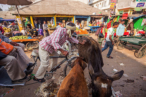 rickshaw driver pushing cow on street (india), cycle rickshaw, load, man, street cows, street market, varanasi