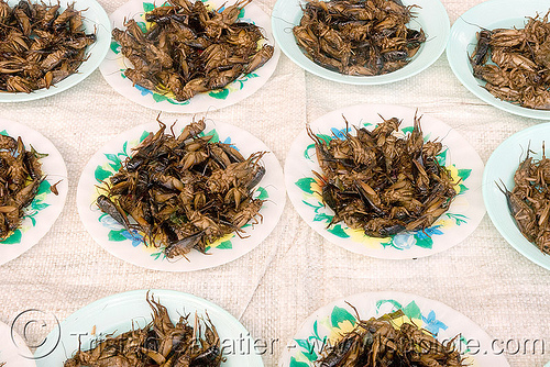 roasted crickets - edible insects - entomophagy (laos), edible bugs, edible insects, entomophagy, food, laos, roasted crickets