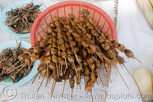 roasted insects on sticks - tessaratomidae, edible bugs, edible insects, entomophagy, hemiptera, heteroptera, laos, roasted insects, tessaratomidae, true bugs