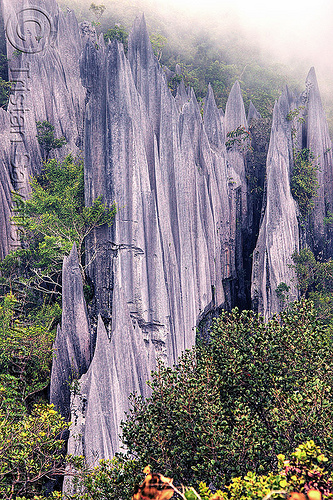 rock blades - mulu pinnacles (borneo), borneo, erosion, geology, gunung mulu national park, jungle, limestone, malaysia, pinnacles, rain forest, rock